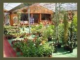 viveros flores plantas en manresa, tienda alimentacion ecologica en el bages