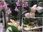 Floristerías, Flores y plantas
