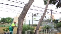 L'Ajuntament actua contra la processionària als parcs i zones verdes del municipi