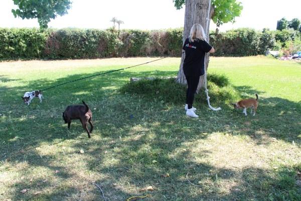 Doce municipios de l'Horta Sud tienen mancomunado el servicio de recogida de animales